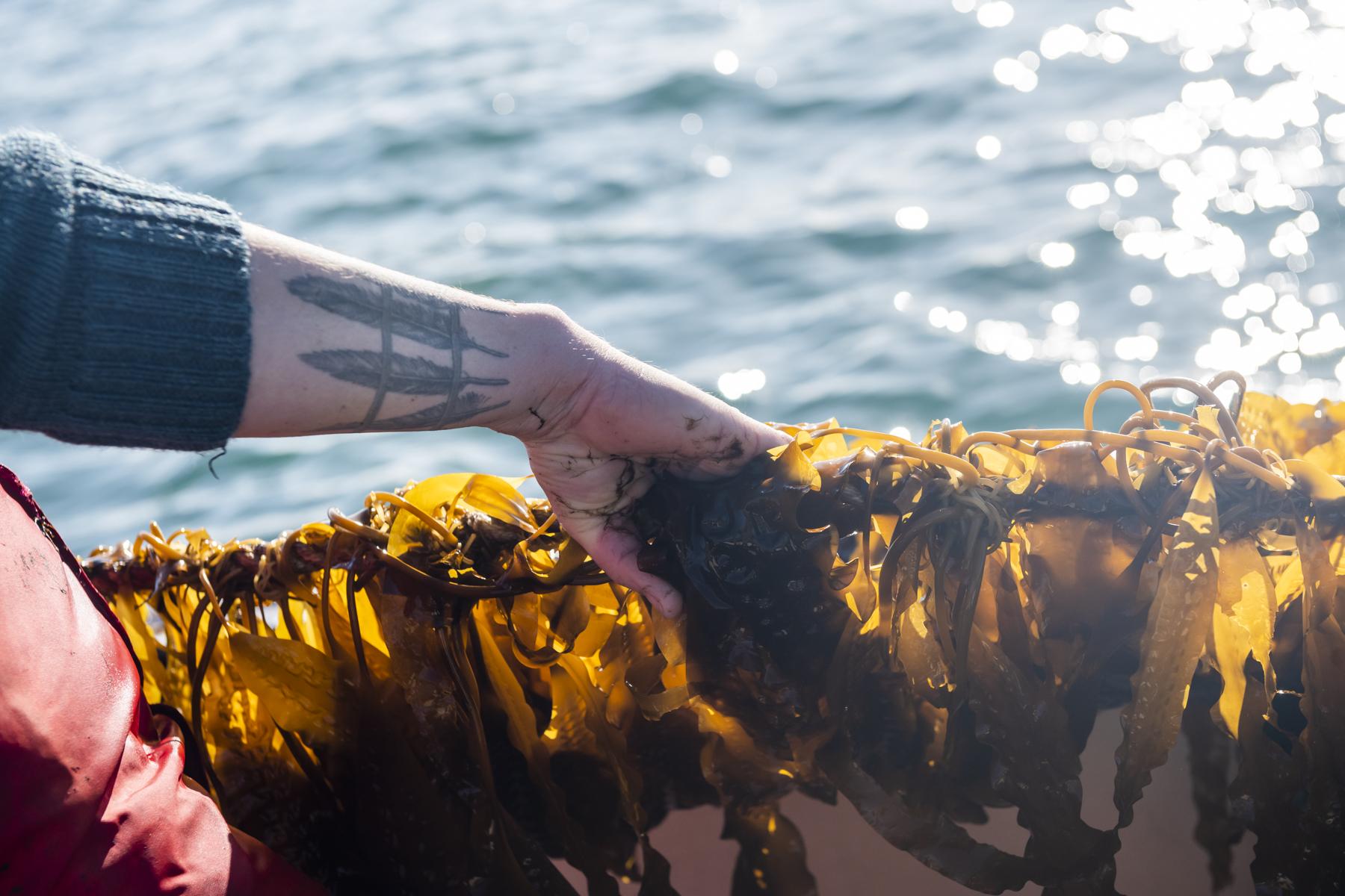 Islander Kelp, Nordirland. SF 13/2020